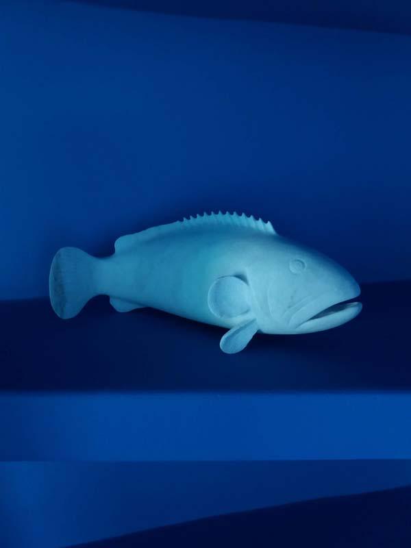 tinos marble fish tinos marble fish